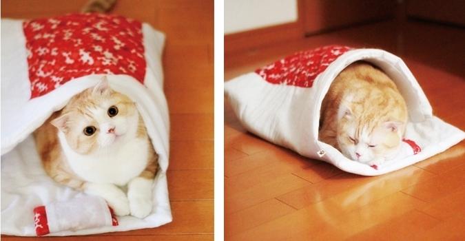 猫用和布団で寝るネコ