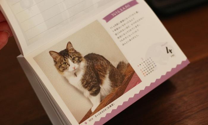 フェリシモ まいにちにゃんこ 日めくりカレンダー