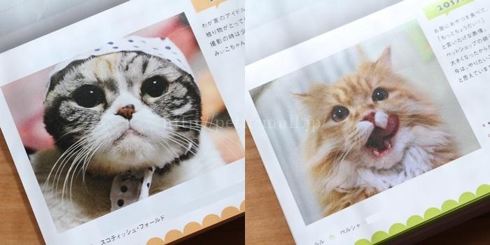 フェリシモの卓上カレンダー「まいにちにゃんこ」