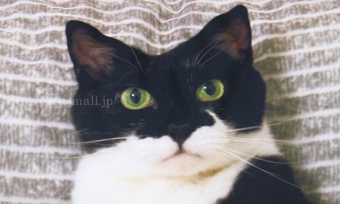 フェリシモ 添い寝待ち猫 ギズモさんまくらカバーが超リアル