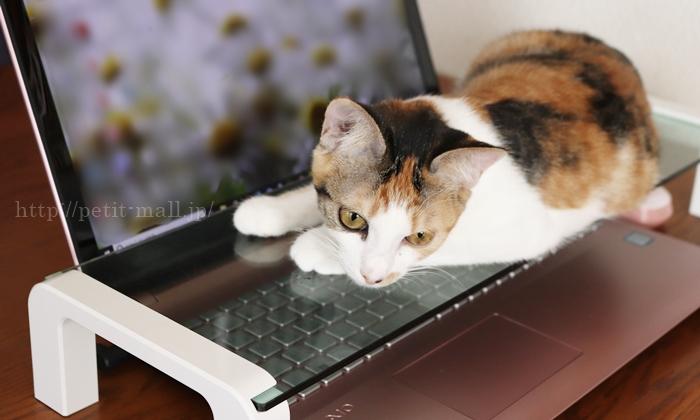 キングジム デスクボードでキーボード猫乗り問題解決