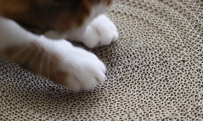 バリバリボウルで爪を研ぐ猫