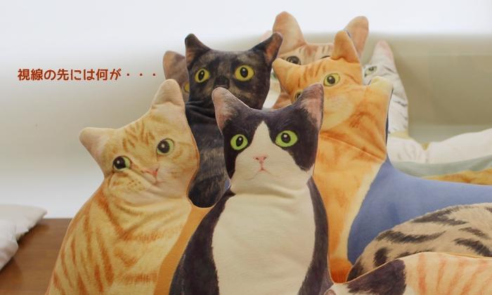 にゃんともぜいたくな 猫まみれハーレムクッションの会 猫たちの表情
