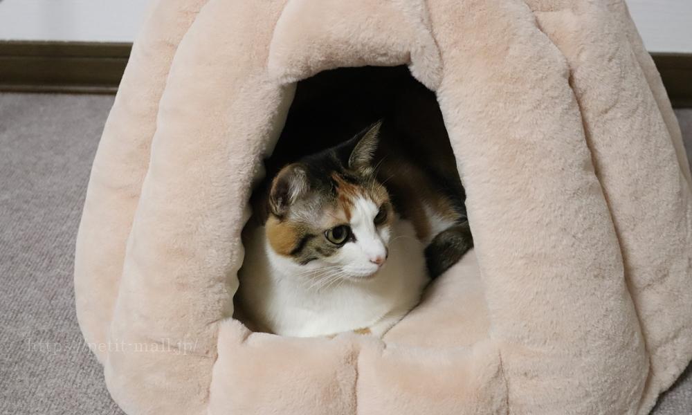 ペットハウス 猫が入っている様子