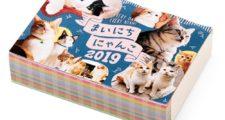 フェリシモ まいにちにゃんこ2019カレンダー