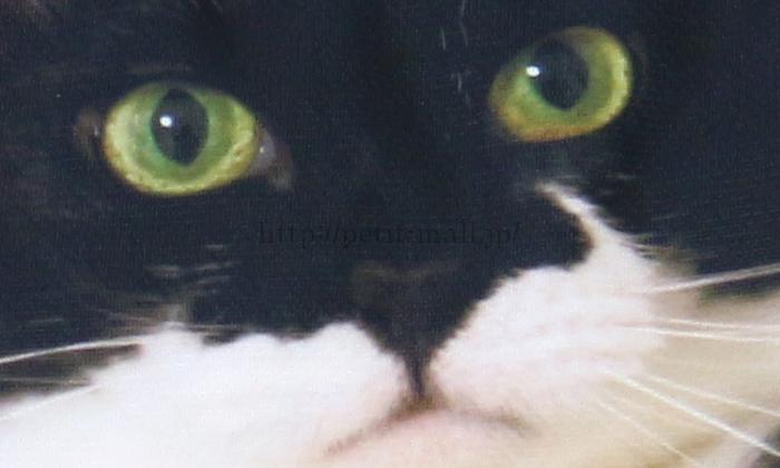 フェリシモ 添い寝まち猫ギズモさんまくらカバー