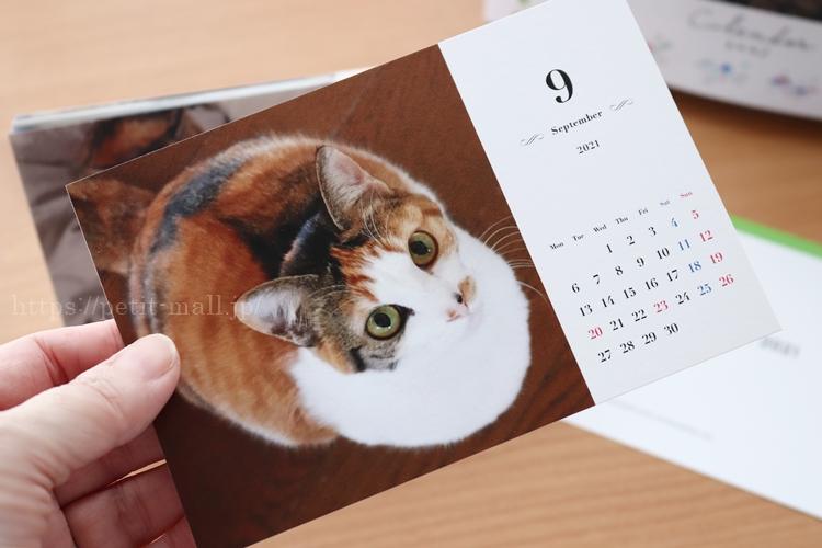 TOLOT(トロット)卓上カレンダー はがきサイズ